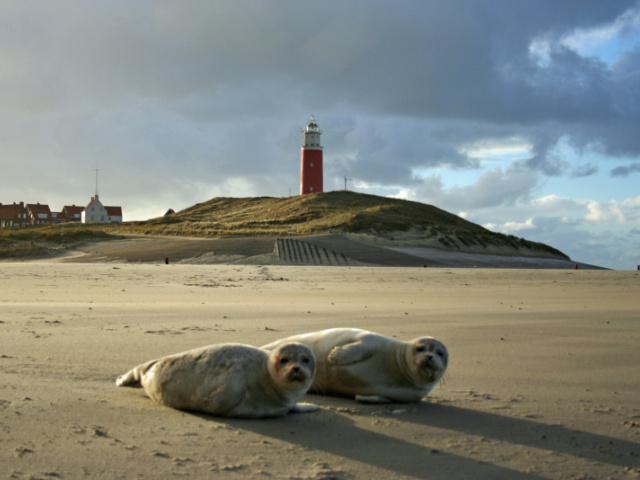 Drei besondere Tiere auf Texel