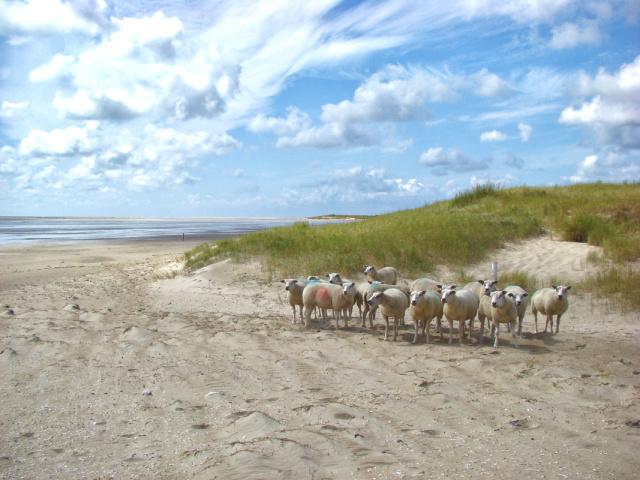 Wandelen op Texel in het naseizoen